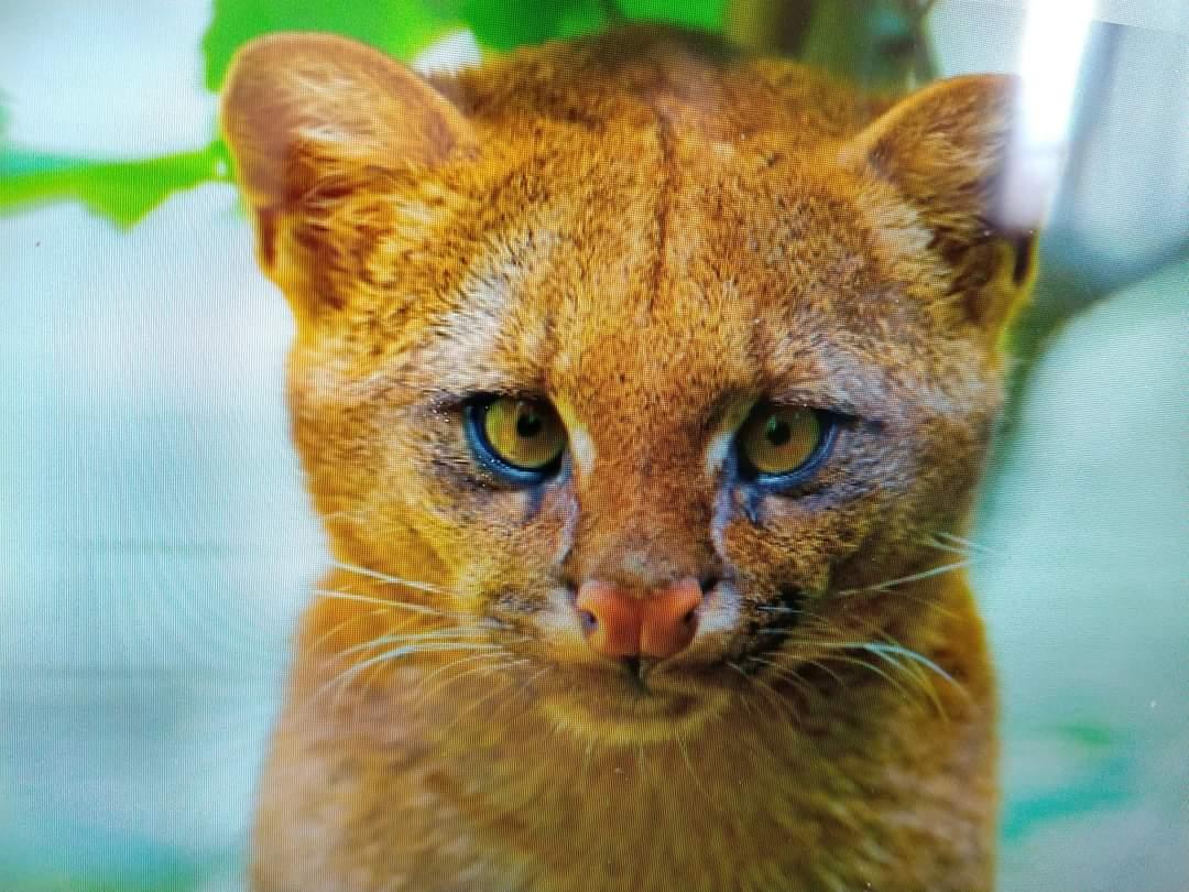 No atienden en el centro de salud animal de Lomas de Tafi en cuarentena.